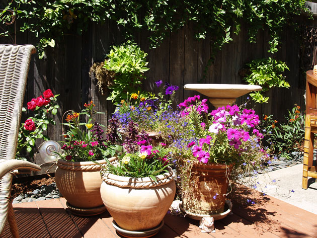 My New Garden and Deck in Sonoma