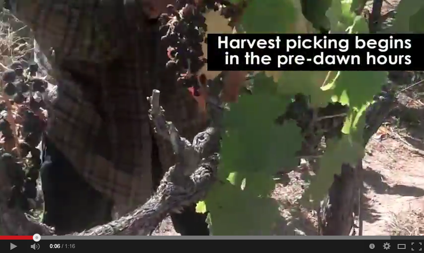 Thumbnail - Harvest Hustle Video